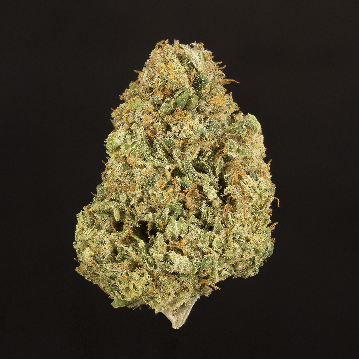 ACDC (Medical only) Product image
