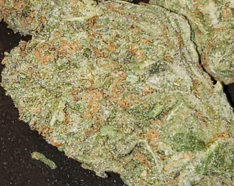 Blue Dream (FREE) Product image