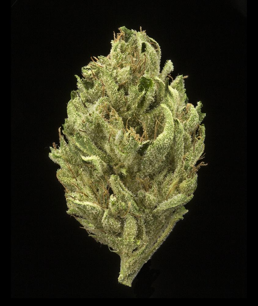 Ghost Train Haze (AU Limit: 3.5g TOTAL flower, per visit / No Med Limit) Product image