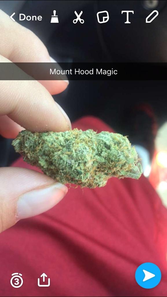 Mt Hood Og (donation) Product image