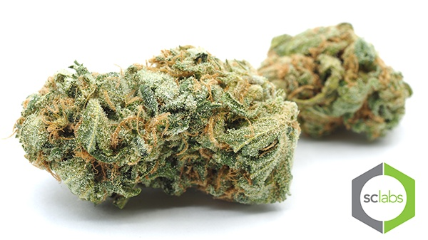 Marijuana Flower | Organic Blue Dream | Simple Organic Delivery | AllBud