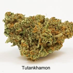 Tutankhamon Product image
