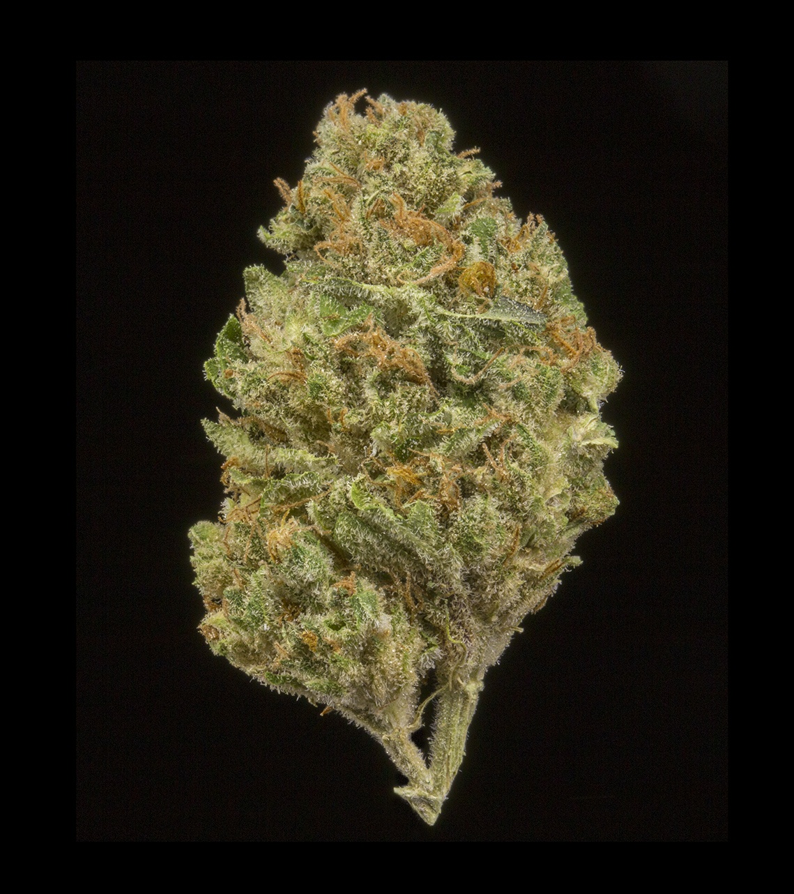 Walker Kush (AU Limit: 3.5g TOTAL flower / No Med Limit) Product image
