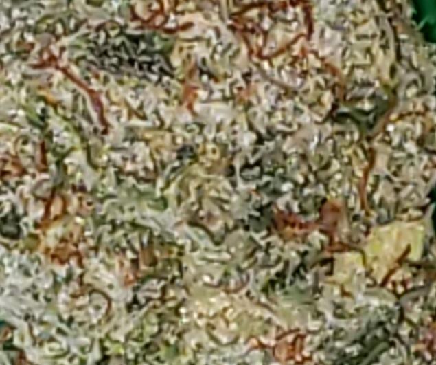 White Rhino [UBER] (FREE) Product image