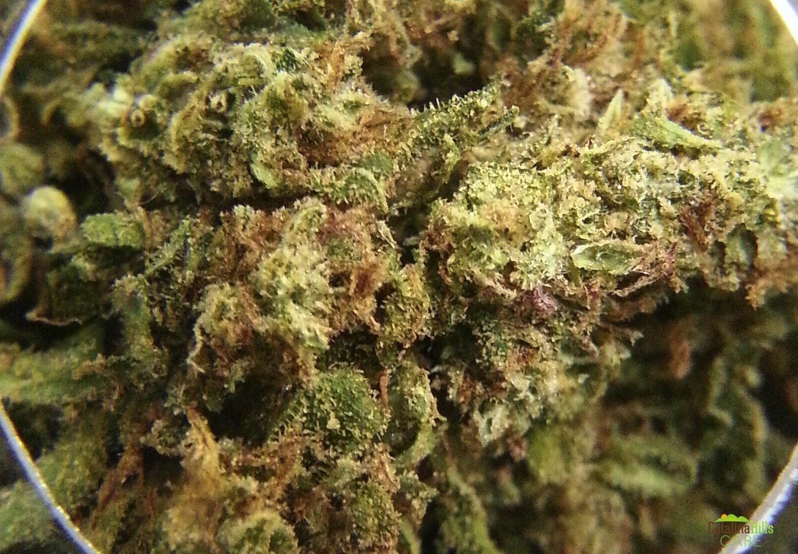 Afghan kush marijuana strain reviews allbud for Afghan kush exterieur