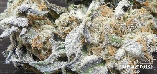 Animal Cookies Product image