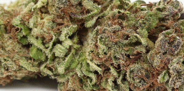 Blue City Diesel Product image