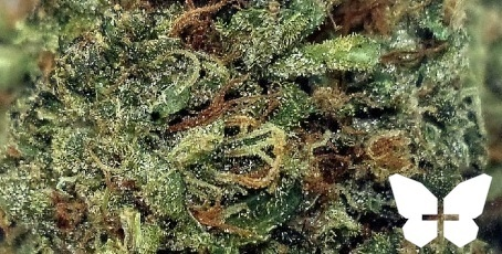 Blueberry Haze by Mother Earth Farms Product image