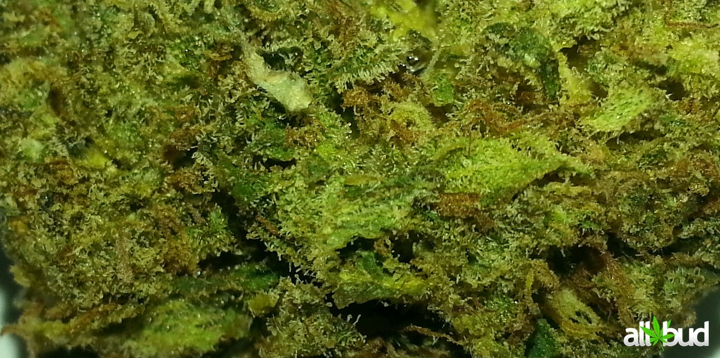 Girl Scout Cookies Gold Tier Product image