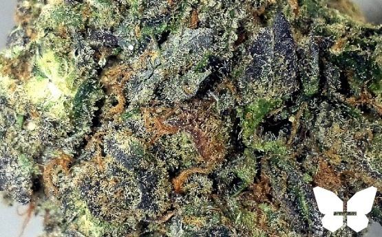 Platinum Girl Scout Cookies Product image