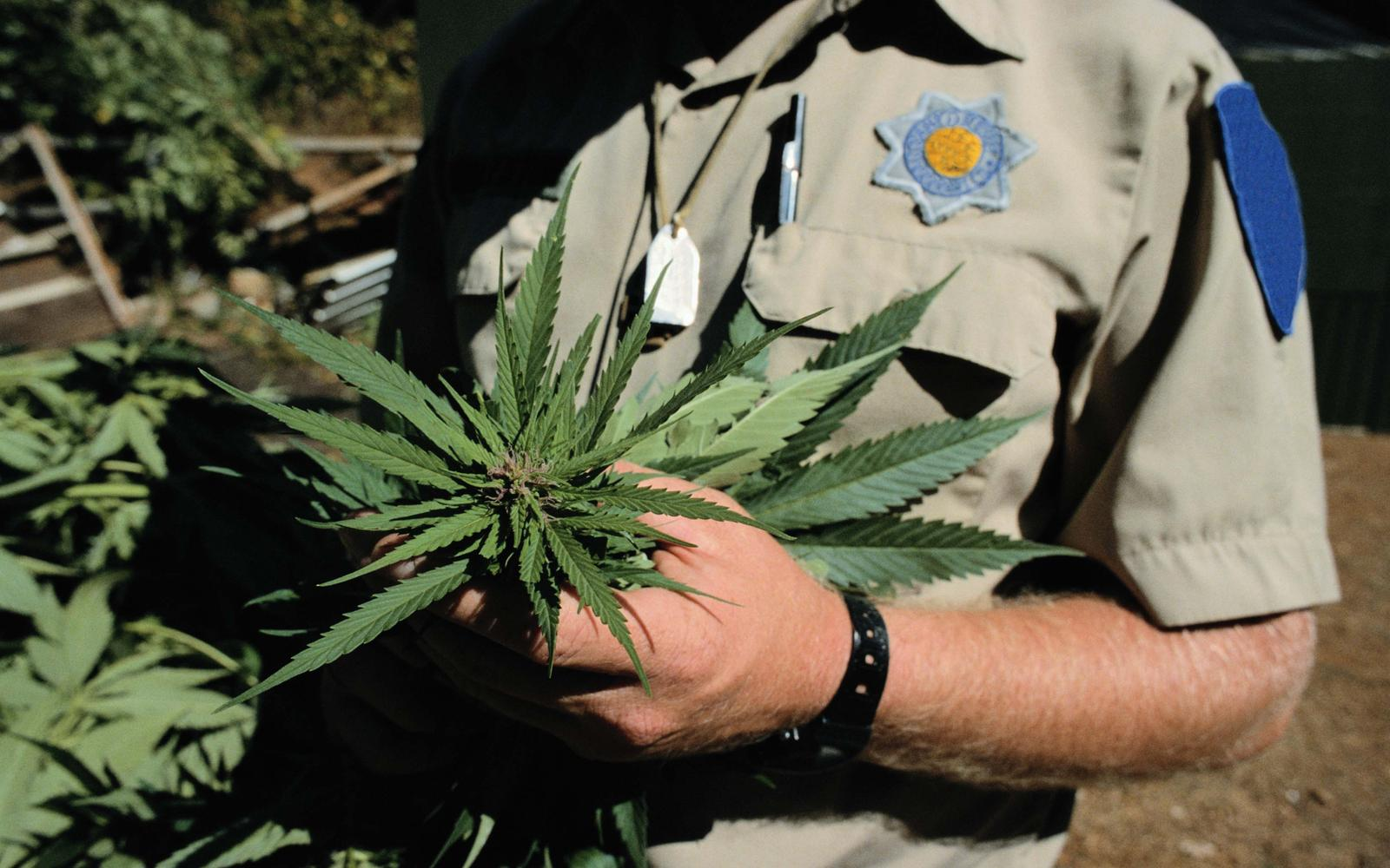 an argument against the use and legalization of marijuana A case against marijuana  what the health effects of widespread legalization and increased marijuana use  i know the responses to his argument.