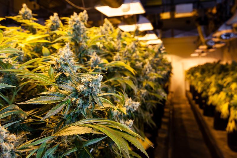 legalization of marijuana in the u s