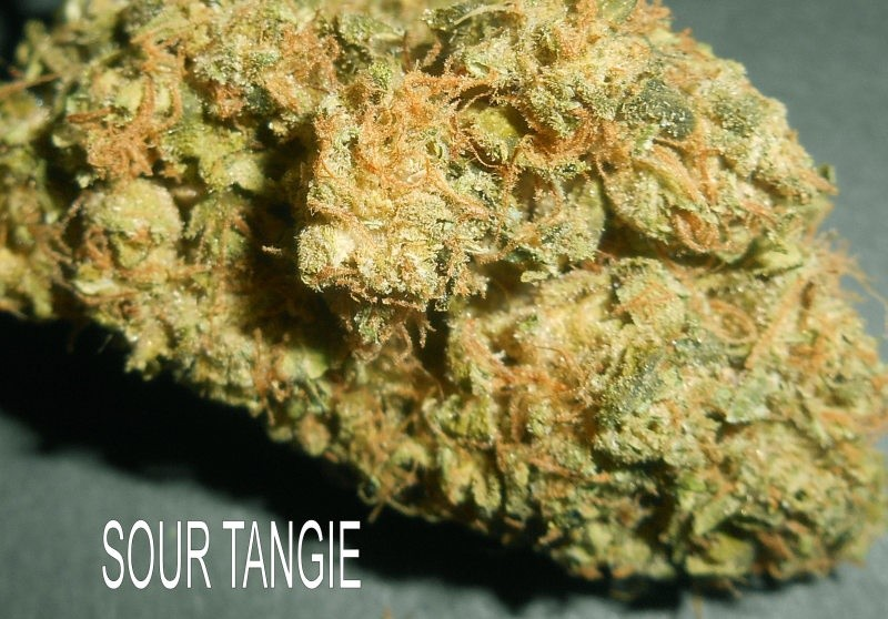 Grandma eats cannabis : Tangie weed strain indica or sativa